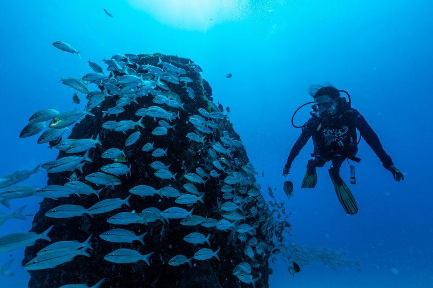 Beatrice Padovani busca informações sobre os meros em um dos naufrágios do Parque dos Naufrágios Artificiais ...