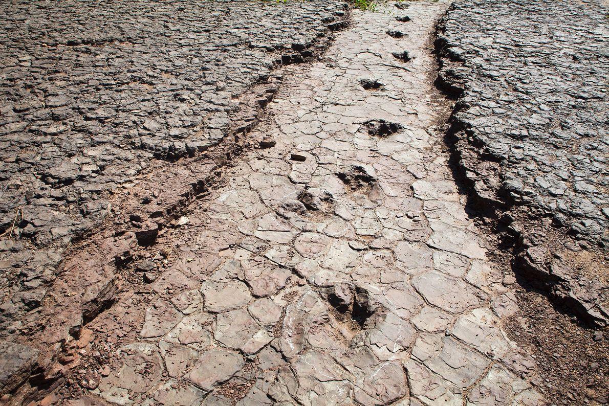 Um conjunto de pegadas de dinossauros cruza o Vale dos Dinossauros em Sousa, nordeste do Brasil. ...