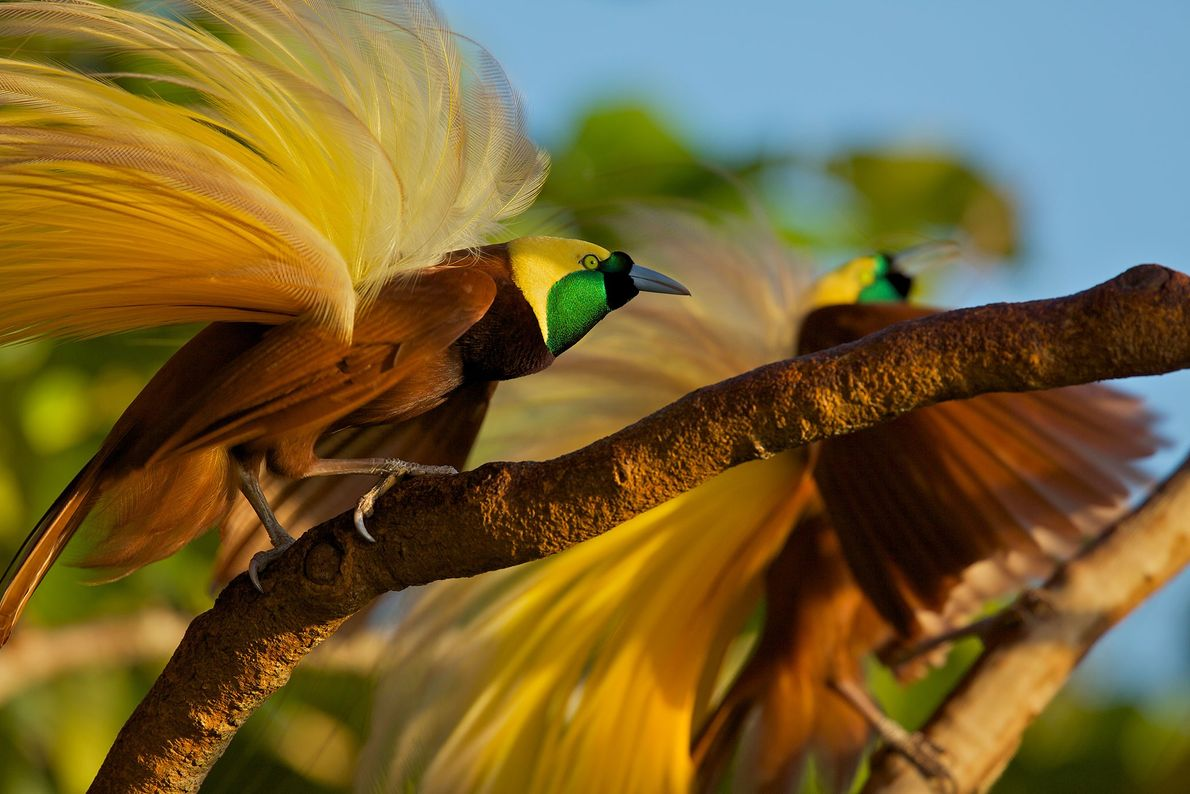 galeria-de-fotos-de-aves