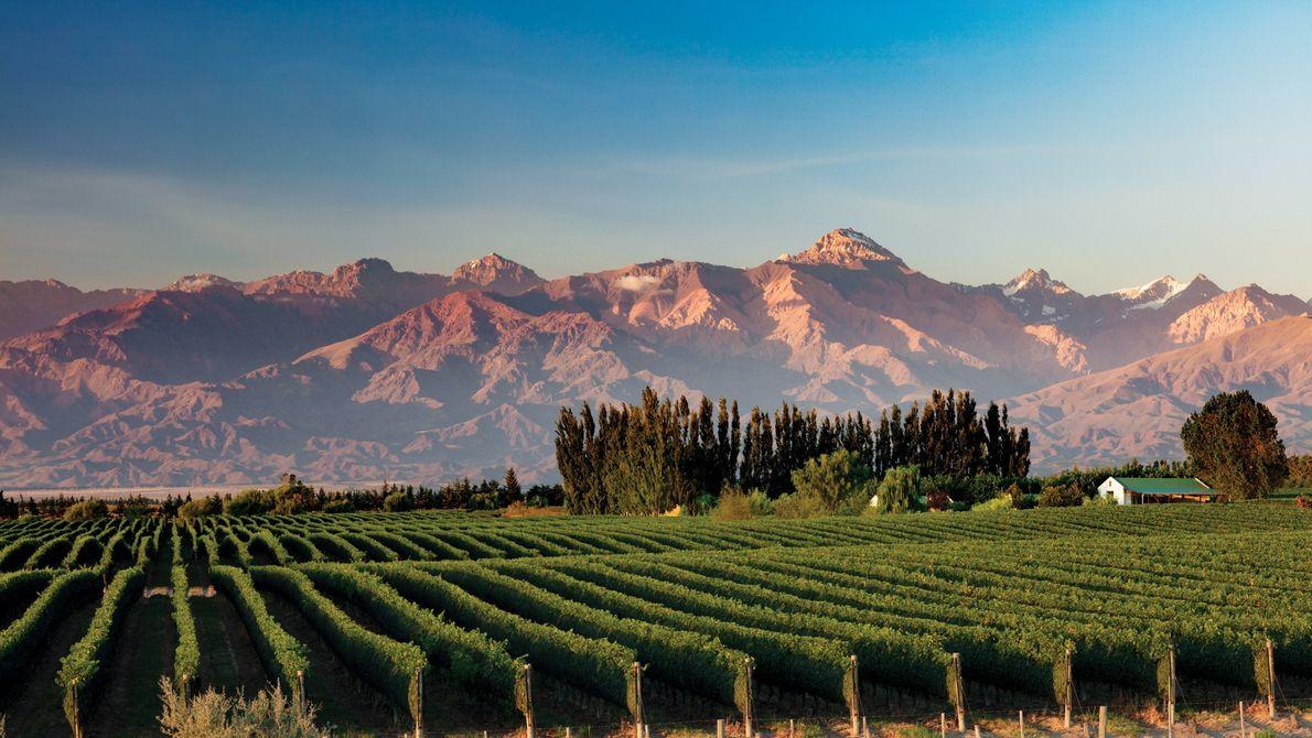 Província de Mendoza, Argentina Os Andes são o pano de fundo para as videiras no Vale do ...