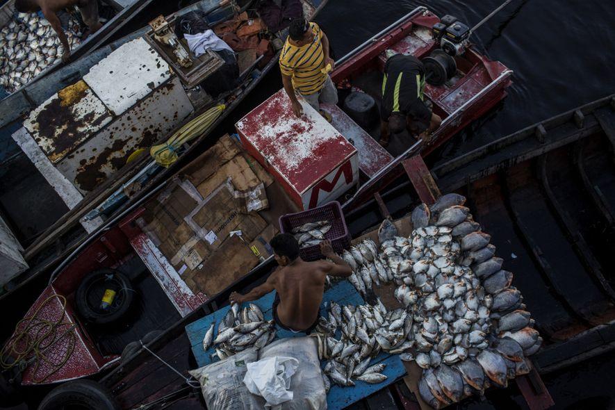 A vida em Manaus corre pelo Rio Negro e pelo Rio Amazonas, fontes de comida, transporte ...