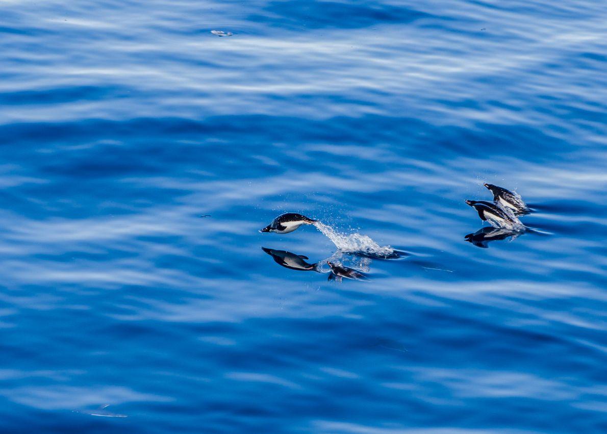 pinguins antártida