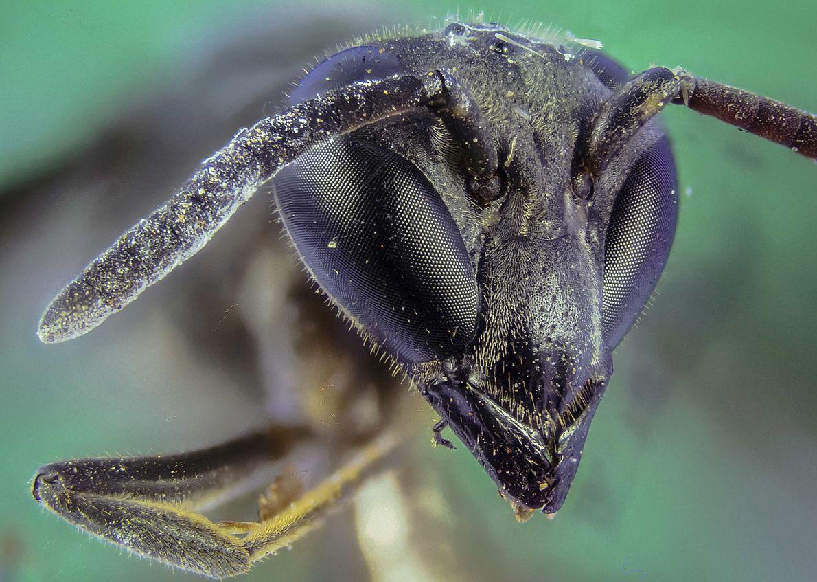 macro formiga