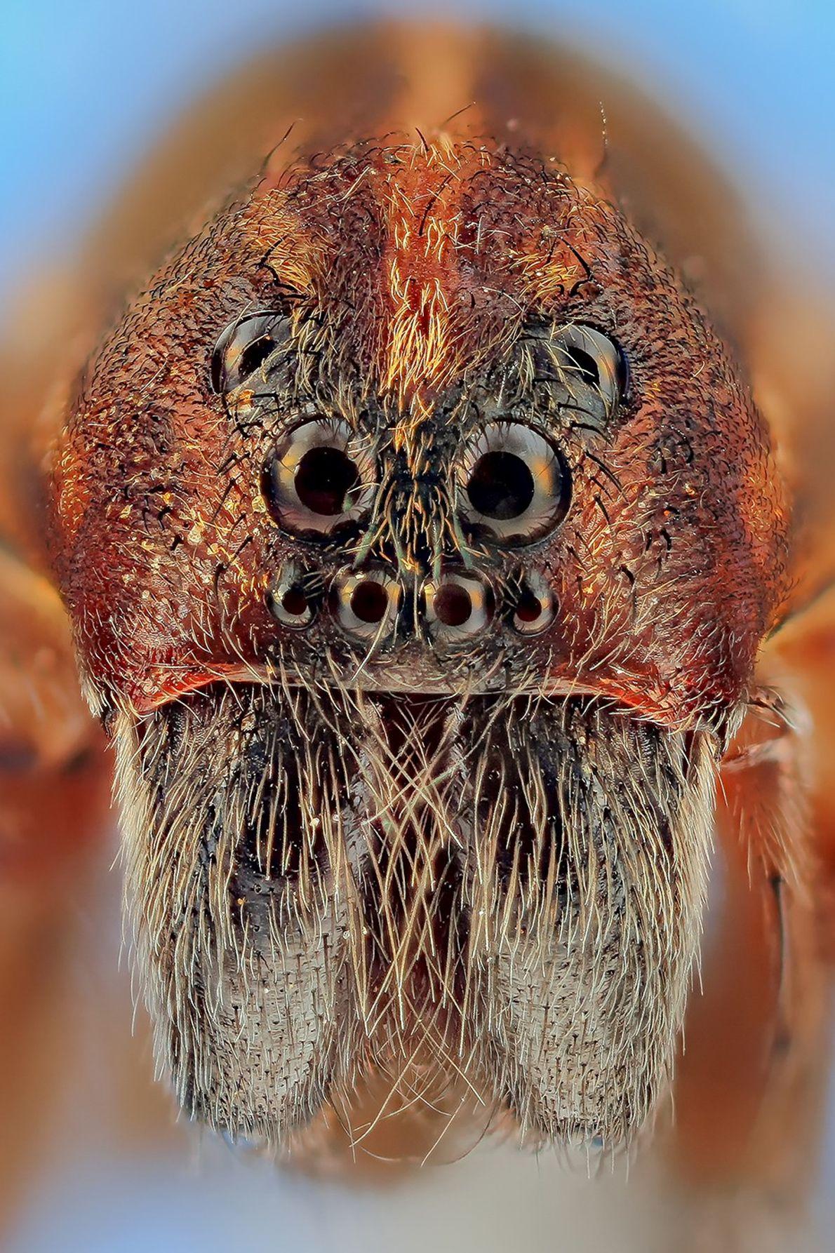 aranha macro