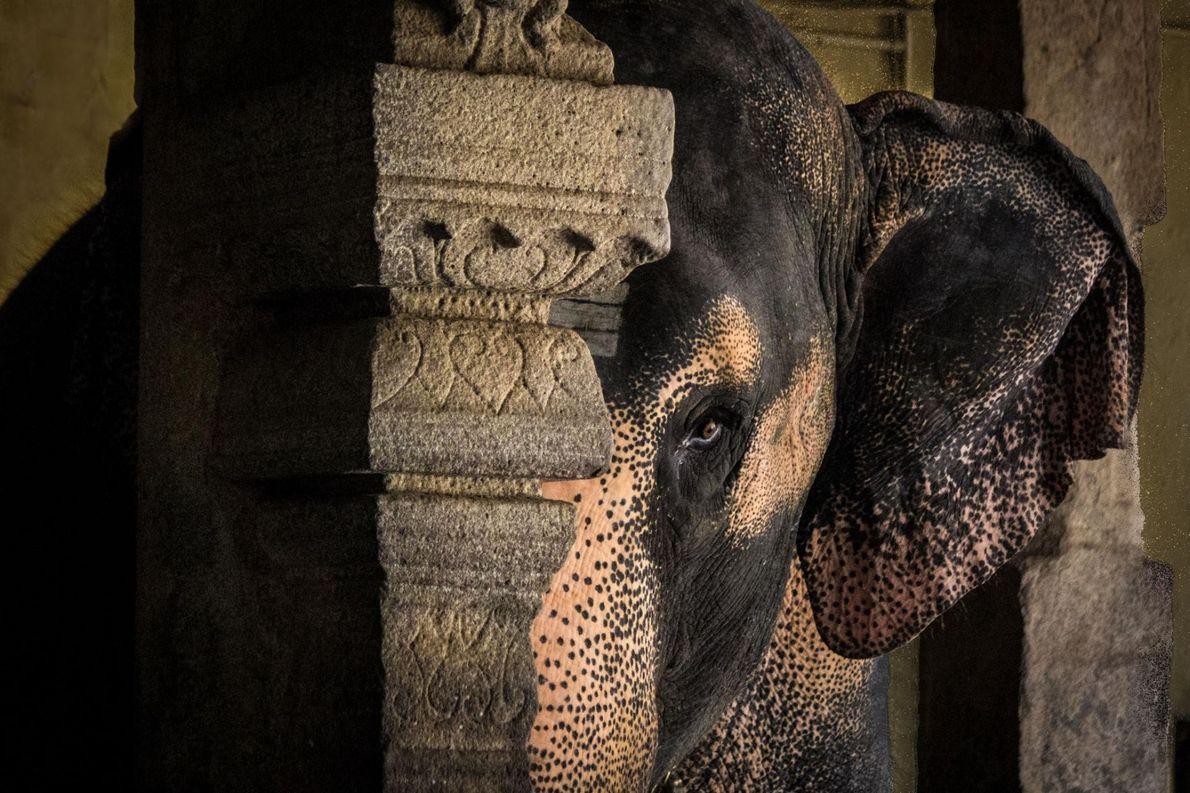Elefante, Tamil Nadu