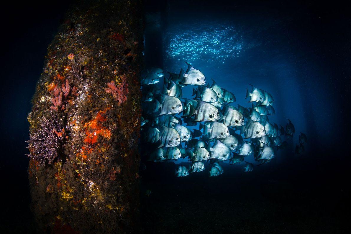 galeria-vida-sob-o-mar