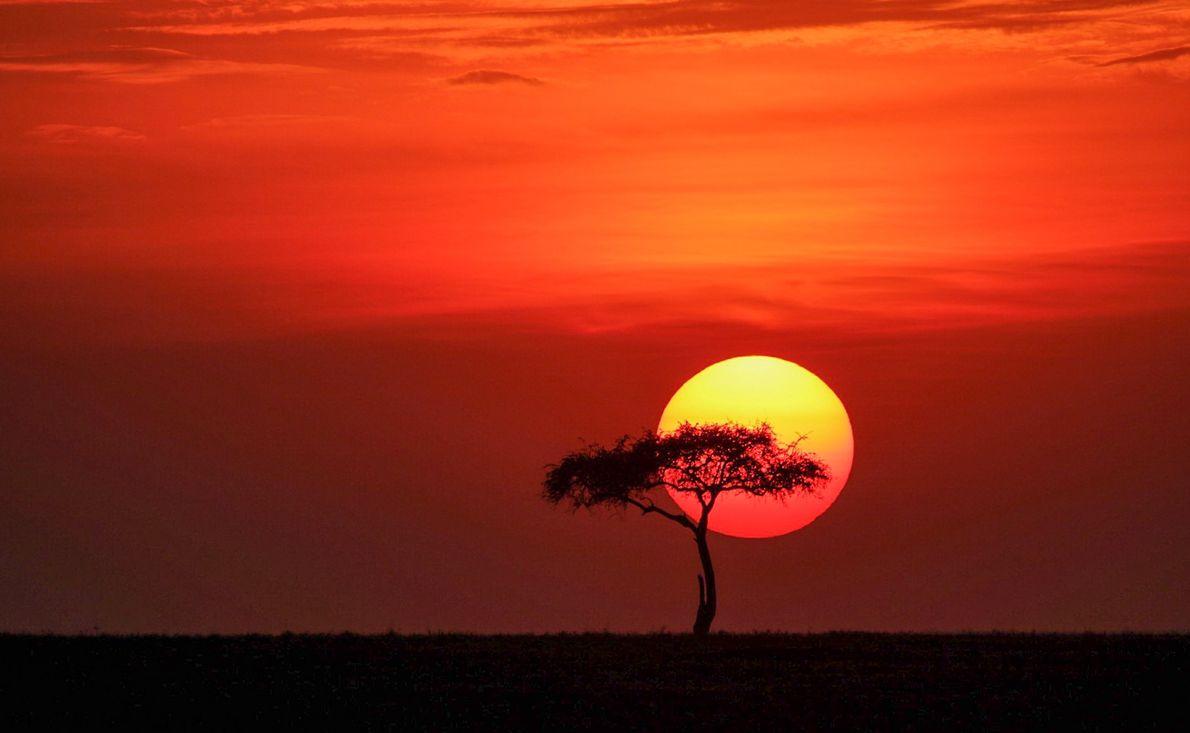 Pôr do sol na savana do Parque Nacional Masai Mara, Quênia.