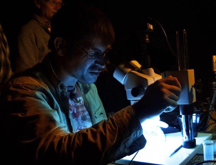 Durante uma expedição em Tanis, outro autor do estudo, Mark Richards (esquerda, fundo), observa Robert DePalma, ...