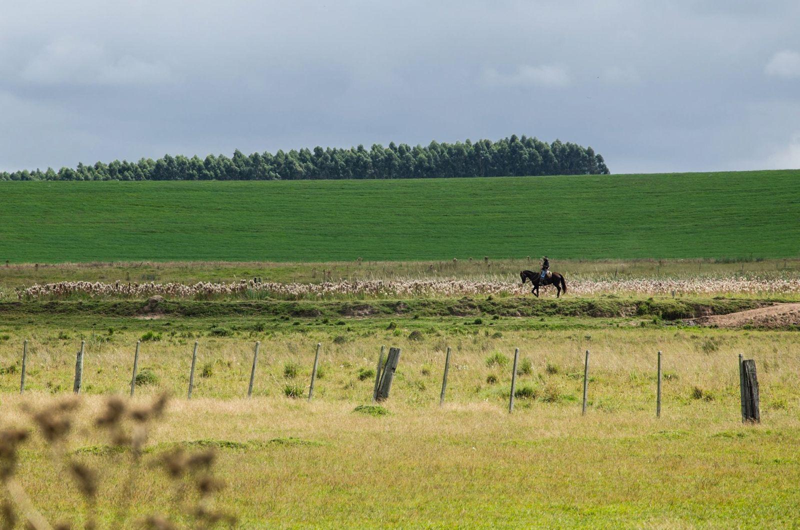 Apenas 47,3% da vegetação nativa do Pampa está preservada. Esse é também o bioma brasileiro com ...