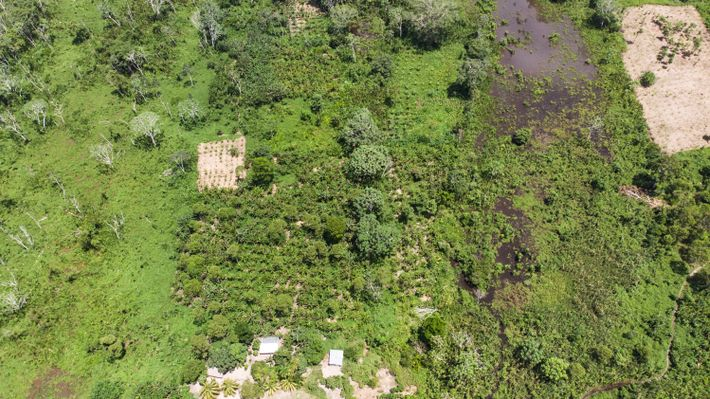Ao longo do rio Abujao, a cinco horas de Pucallpa, surgiram grupos de colonos, nos últimos ...