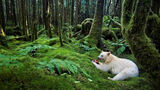 5 animais albinos