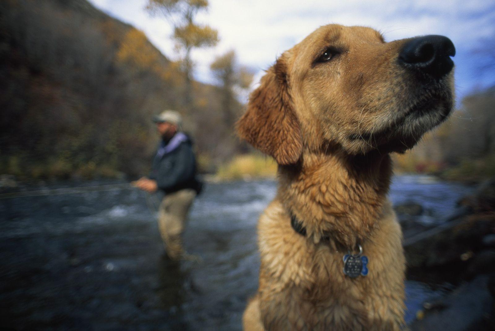 Cachorros-como-a-gente