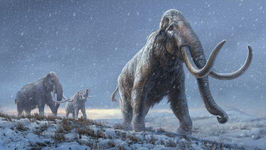 Dentes de mamute de um milhão de anos contêm o DNA mais antigo do mundo