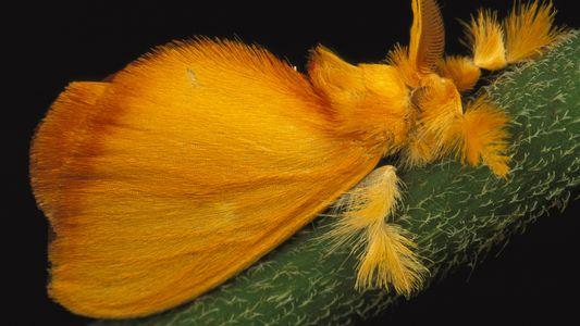 Por que as mariposas são tão atraídas por luzes fortes?