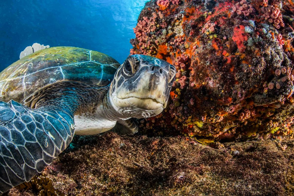 Tartaruga curiosa