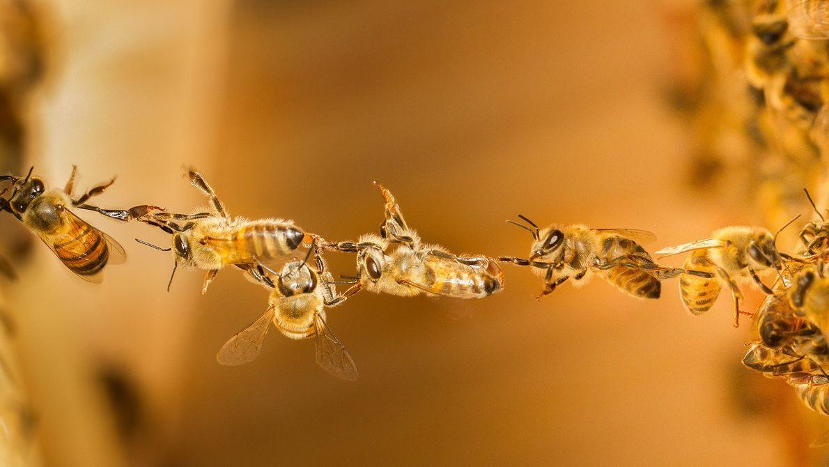 171003-sua-foto-abelhas