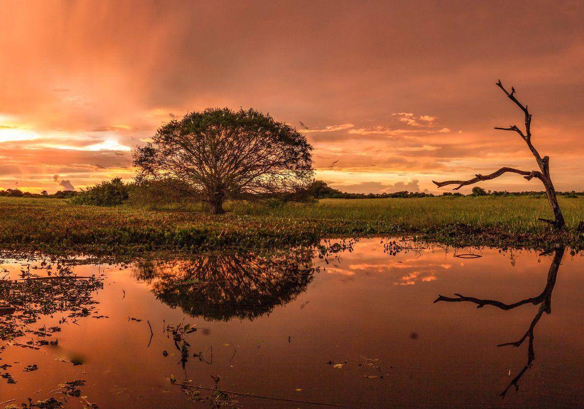 sua-foto-crepusculo-pantanal