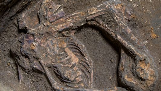 Quem foi Bakhita? Restos mortais de escrava africana evocam a triste memória do holocausto negro no ...