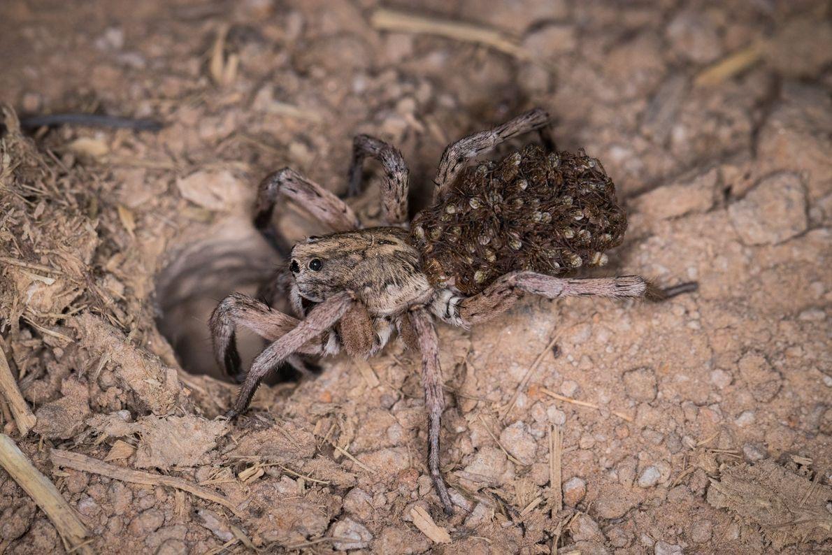 sua-foto-170910-aranha-filhotes