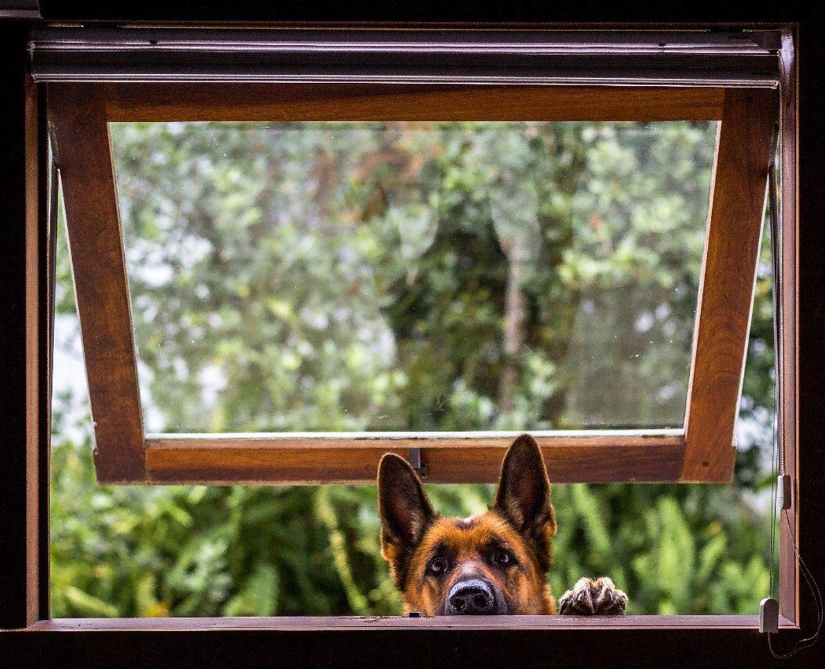 sua foto cachorro na janela