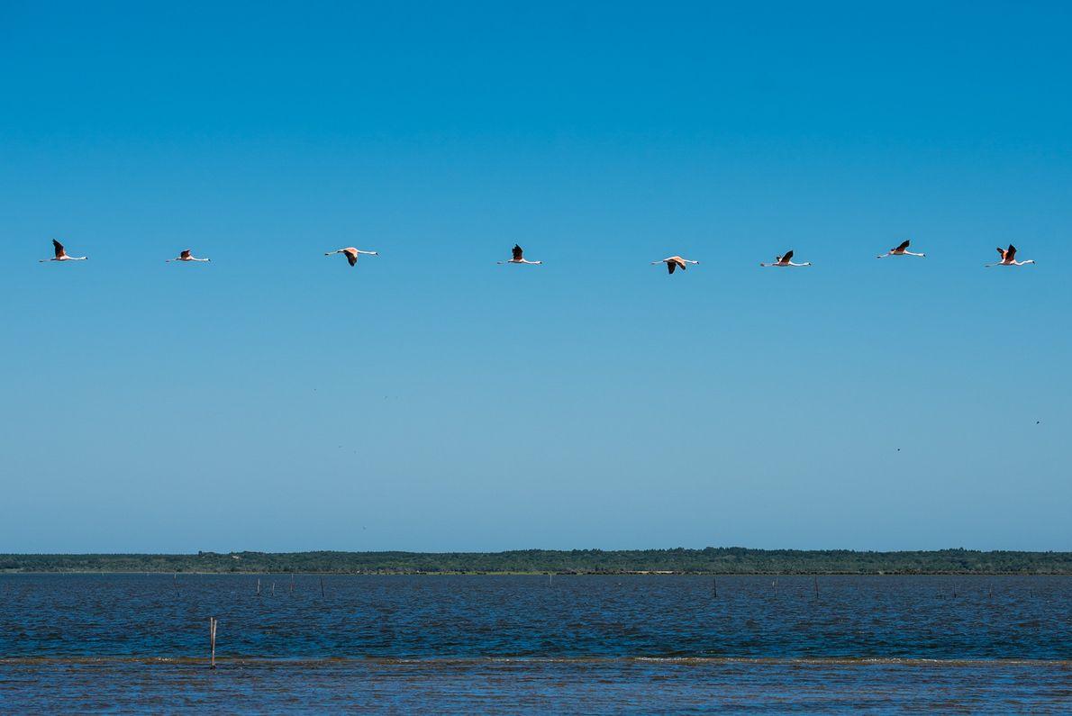 sua foto flamingos