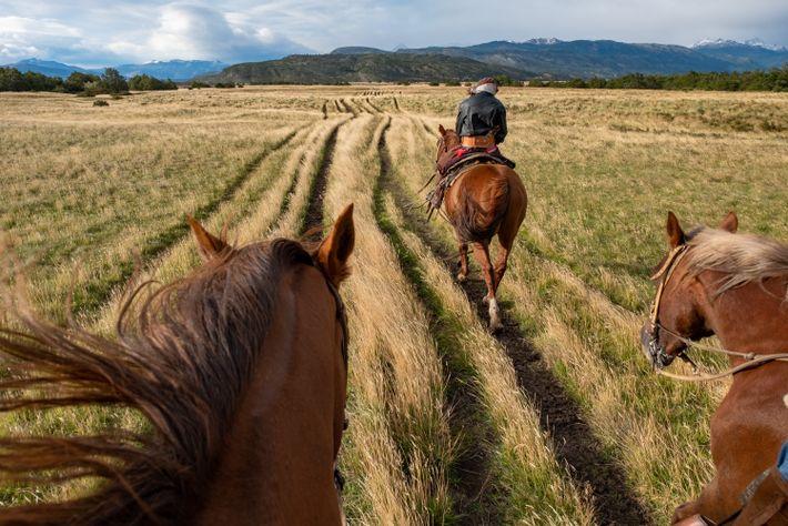 Um gaúcho leva os visitantes a um passeio a cavalo pelo prado ou pelos pampas da ...