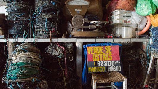 Como as ostras produzidas em Santa Catarina podem ajudar a limpar os mares