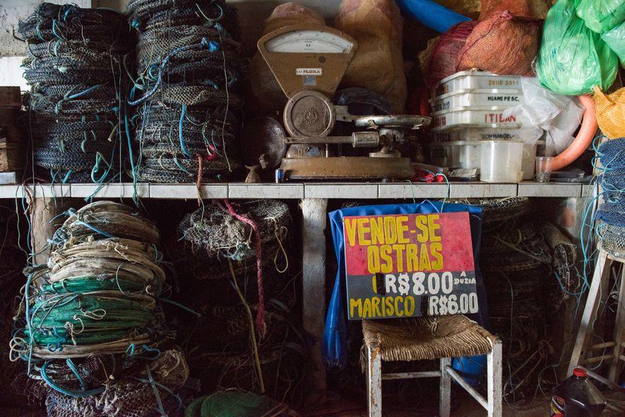 Com aajuda de pesquisas e melhoramentos genéticos feitos em laboratório da Universidade Federal de Santa Catarina (UFSC), a popularização da ostreicultura teve grande impacto socioeconômico nas comunidades de pescadores da ilha de Santa Catarina. A prática – orgânica e extensiva – ainda é uma maneira sustentável de produzir alimentos no mar.
