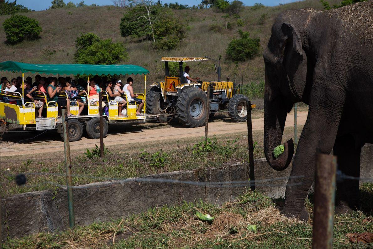 mini zoologico Rana elefante
