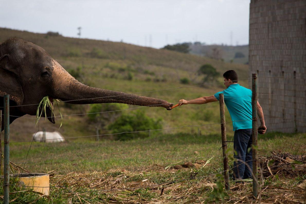rana tromba elefanta