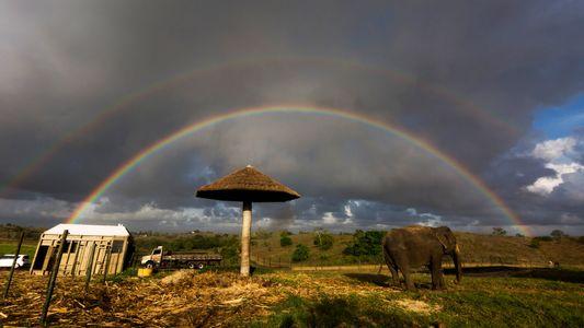 Depois de passar décadas em circos e zoos, elefanta Rana viaja 2,7 mil km por uma ...