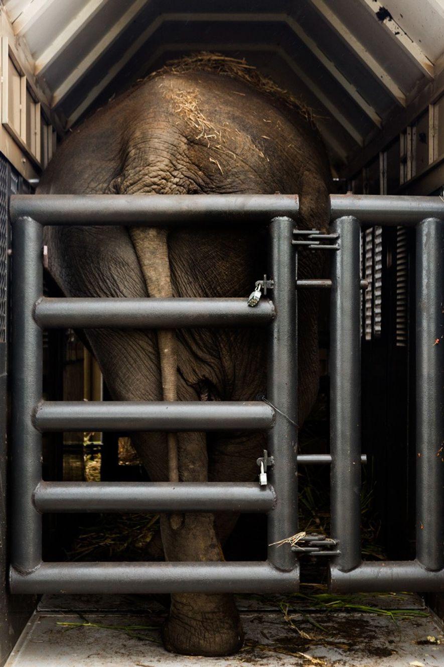 Rana se acomoda no contâiner de metal que a transportou por 2,7 mil km – desde ...