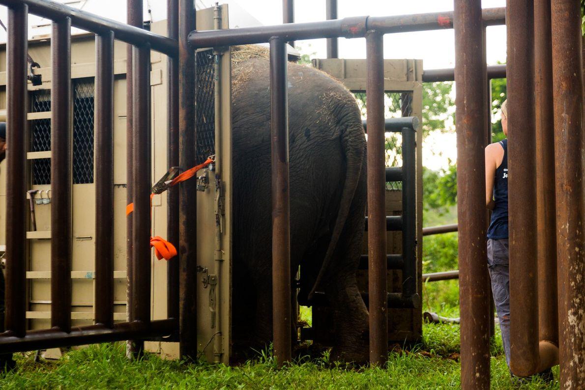 Rana elefante santuario