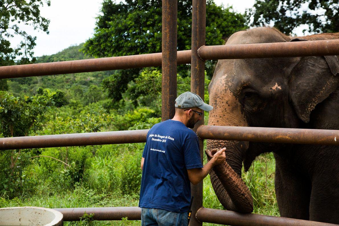 rana-elefante-santuario-de-elefantes-do-brasil