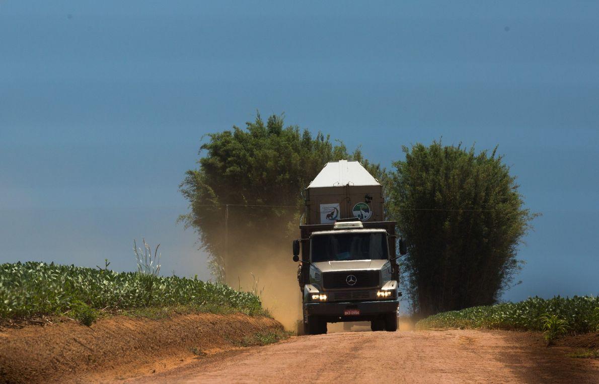 Rana estrada caminhão