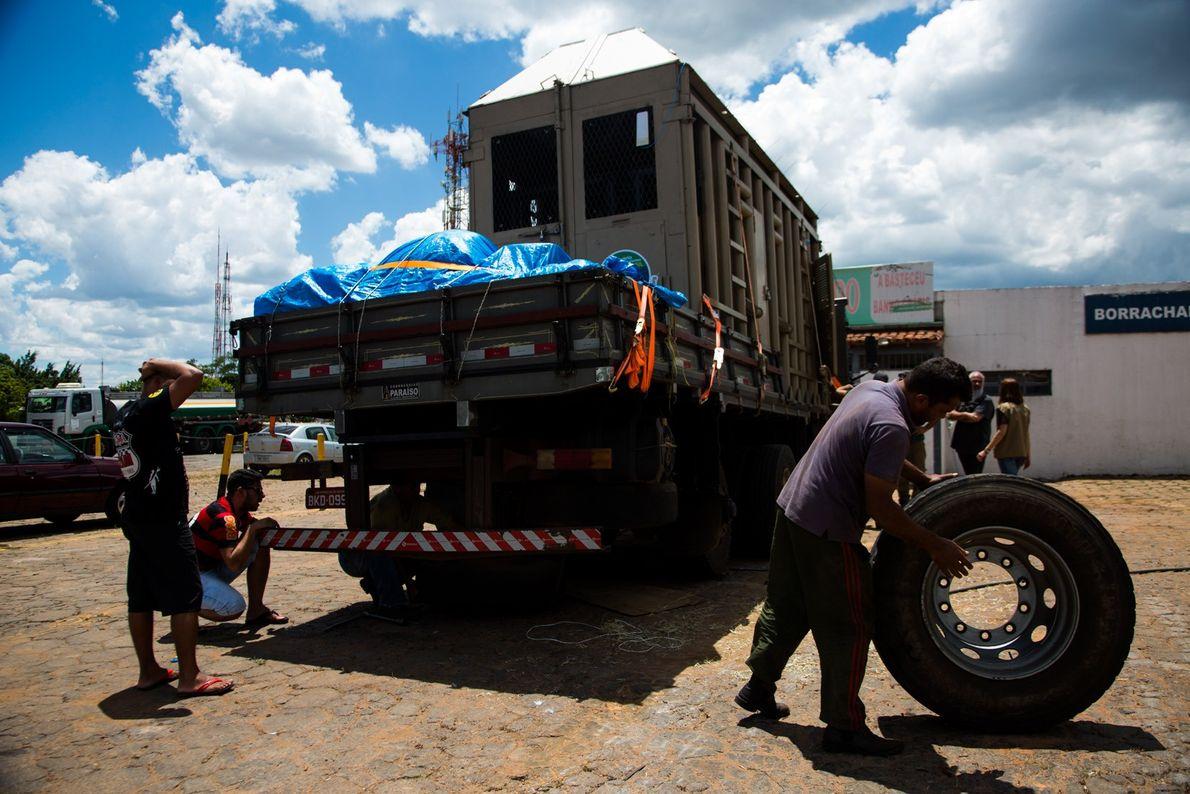 Rana elefante pneu furado