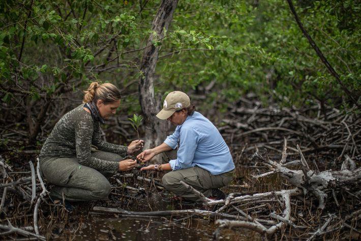 Flávia e a bióloga Karina Molina coletam informações sobre árvores do mangue. O Projeto Tamanduá deve ...