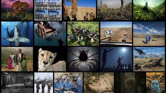 Os editores de fotografia da National Geographic selecionaram uma imagem para cada ano deste século, retratando ...