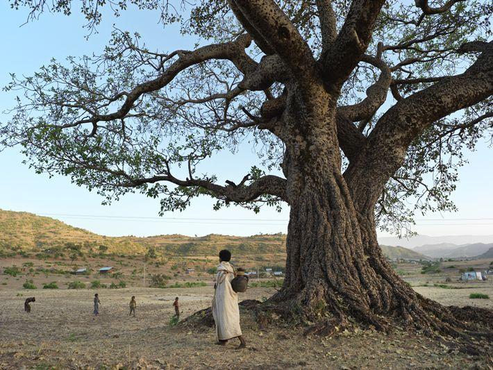 21-projeto-agua-etiopia-india-minas-gerais