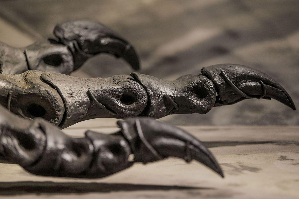 Um detalhe mostra os pés e garras de um espécime quase completo do Tyrannosaurus rex apelidado ...