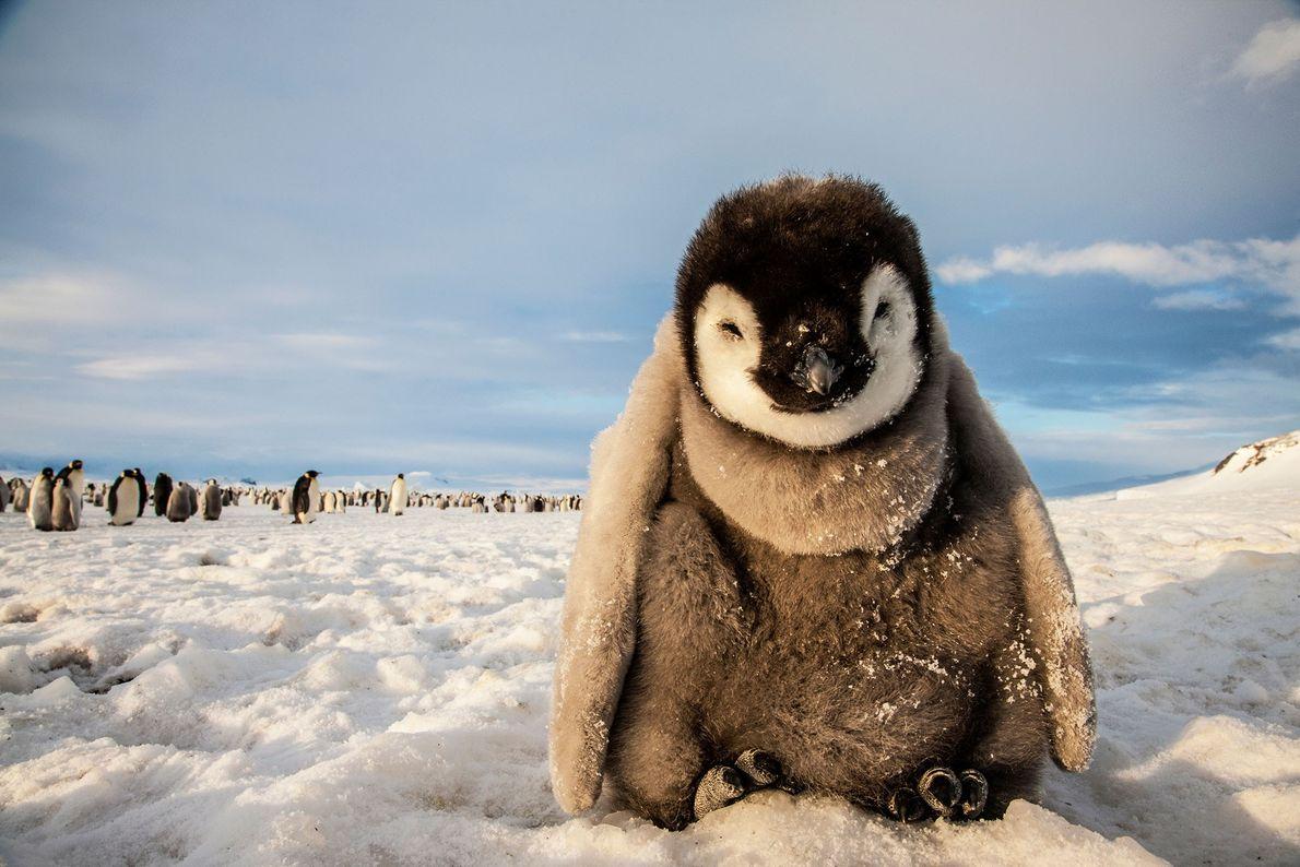 galeria-de-aves-national-geographic-pinguim