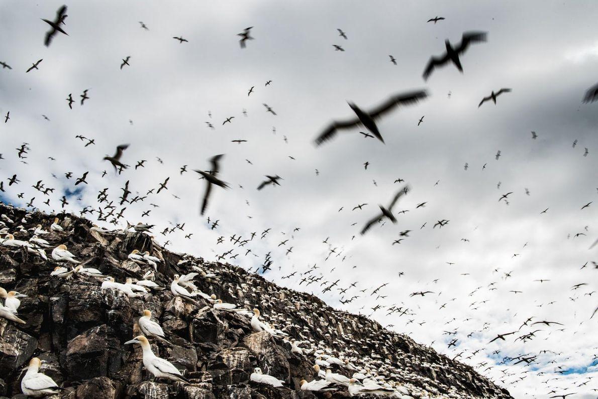 galeria-de-fotos-animais-em-acao-albatrozes