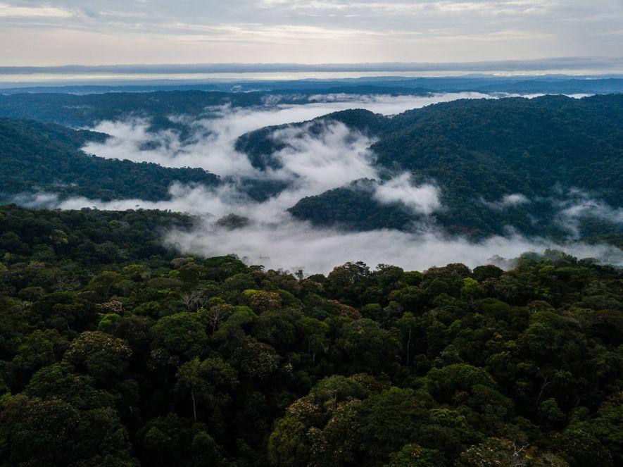 Esta parte da Colômbia é uma das regiões mais ricas em espécies do mundo. Os nativos ...