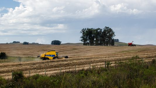 Conheça o Pampa, o bioma menos protegido do país