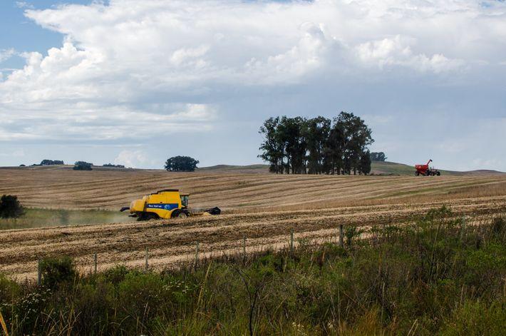 Máquinas acabam de fazer a colheita na região de Dom Pedrito (RS). Várias dessas terras costumavam ...