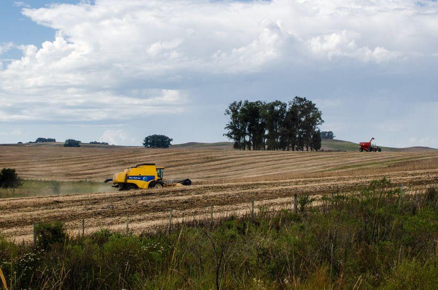 Máquinas acabam de fazer a colheita na região de Dom Pedrito (RS). Várias dessas terras costumavam …