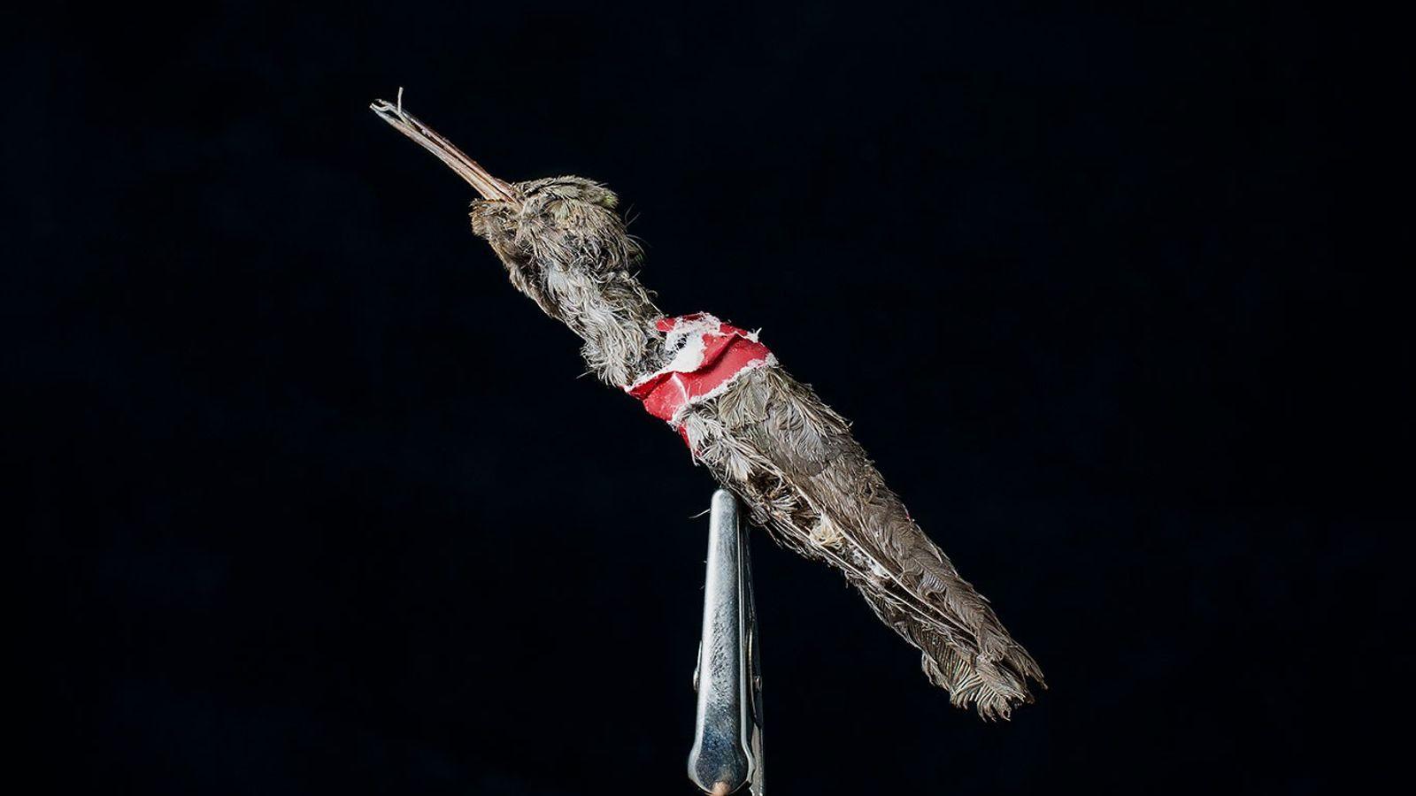 beija-flor-amuleto-mexico