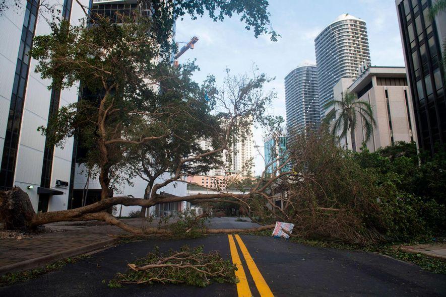 Derrubada pelo Irma, uma árvore bloqueia rua no centro de Miami, na Flórida, em 11 de …