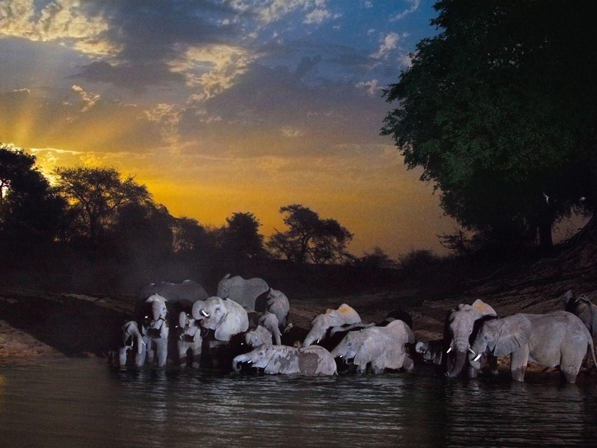 Elefantes, Chade