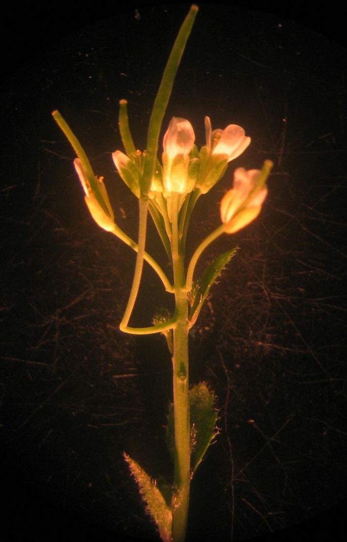 Cantilever plant
